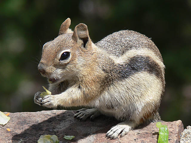 baldiri : esquirol : BALDIRI06062701.jpg