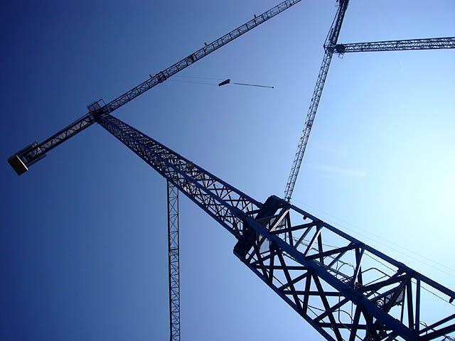 baldiri : blue cranes : BALDIRI06112101.jpg