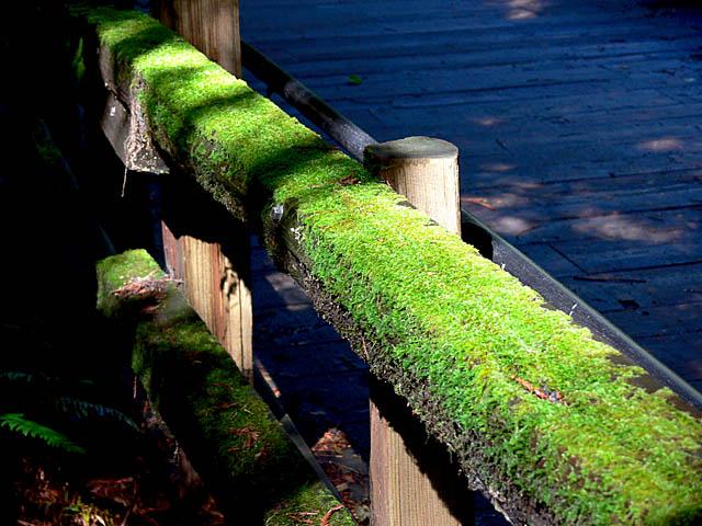 baldiri : muir woods : BALDIRI07052901.jpg