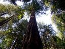 baldiri : sequoia : BALDIRI07053001.jpg